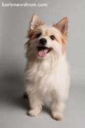 Scamper D130360 Is An Adoptable Terrier Dog In Edina Mn Name