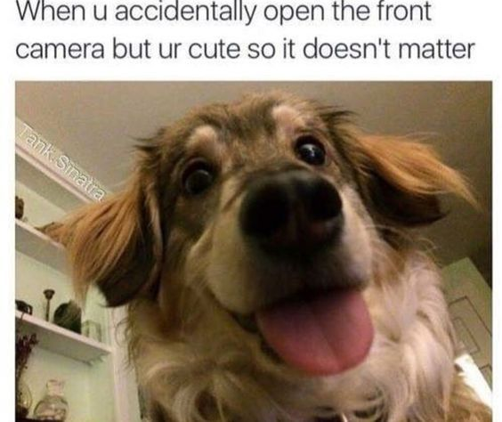 Cl Cute Funny Animal Memes
