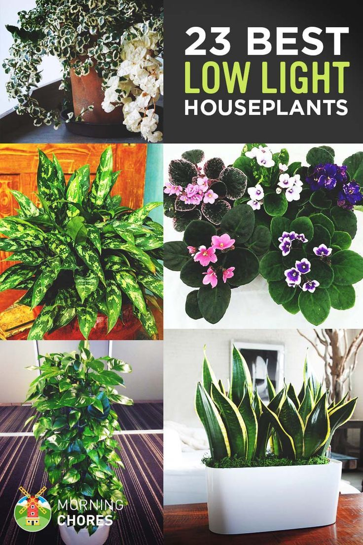 Low Light Houseplants & 23 Low-Light Houseplants That Are Easy to Maintain and (Nearly ...