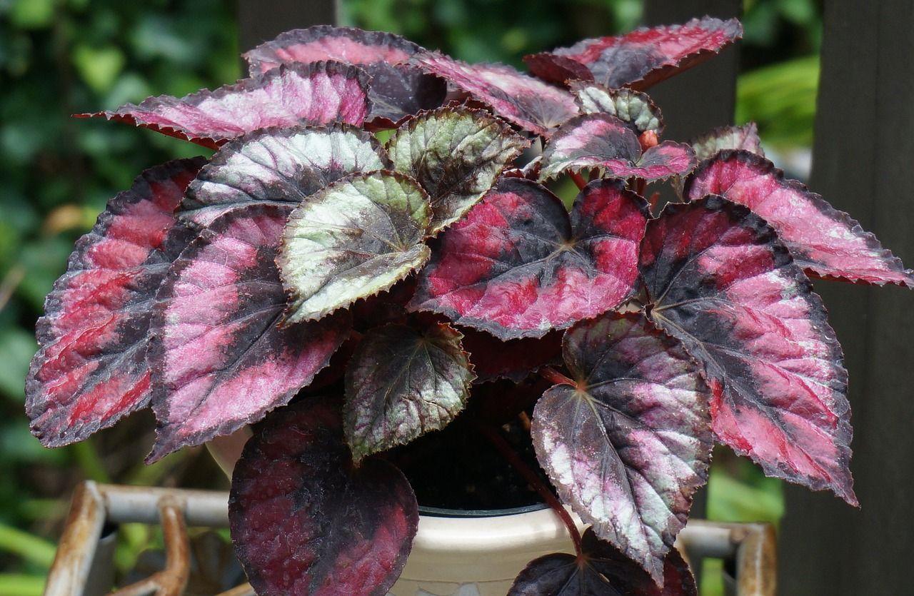 How To Prune Houseplants Plants House Plants Low Light Plants