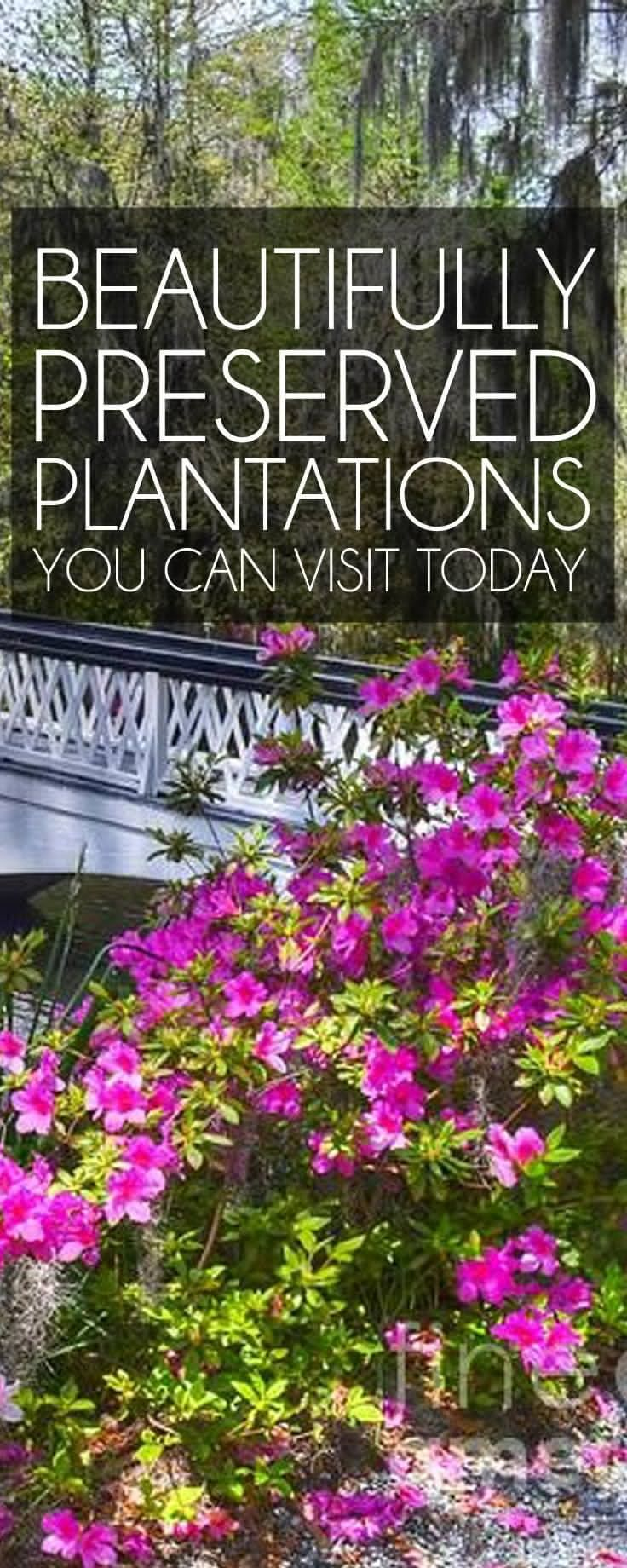 Pin on Perfectly Preserved Plantations