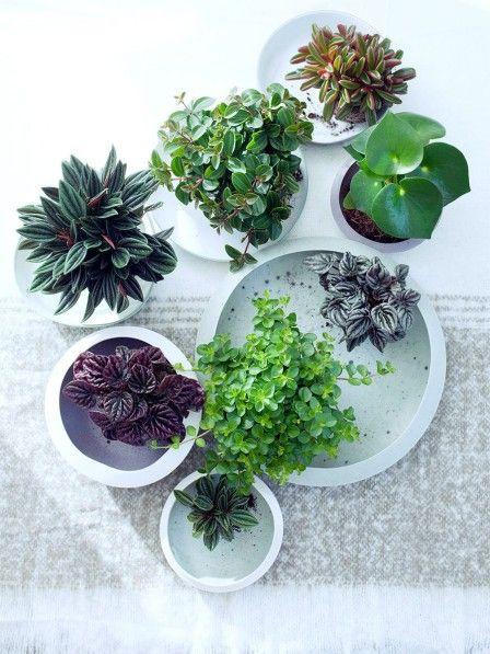 Zwergpfeffer wohlf hlpflanze in handlichem format blumen und pflanzen pinterest pflanzen - Pfeffer zimmerpflanze ...