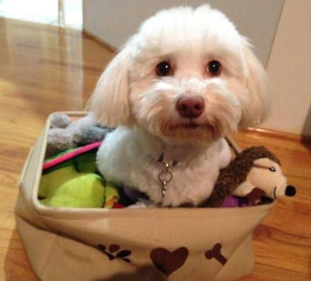 Vote For Kai In The Humane Society Of Tampa Bay S 2017 Pet Calendar Contest Humane Society Pets Photo Contest