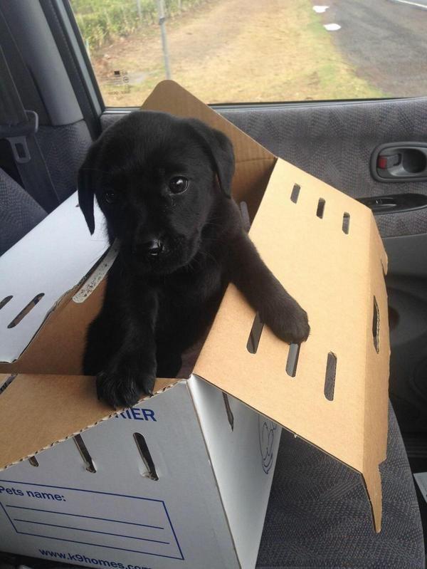 """""""@CuteEmergency: Puppy, in a box. """""""