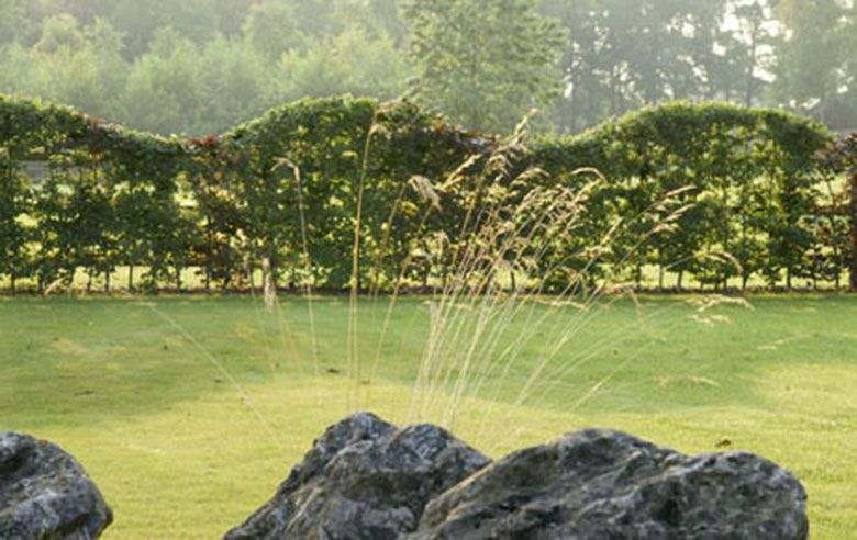 Landschapstuin - Greenlabel