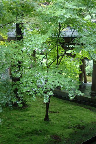 Jardin de mousse by eryn vorn via flickr mousse et - Jardin japonais mousse ...
