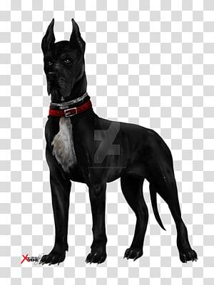 Cane Corso Great Dane Labrador Retriever Dog Breed Black Dog Pitbull Transparent Background Png Clipart Labrador Retriever Labrador Retriever Dog Dog Breeds