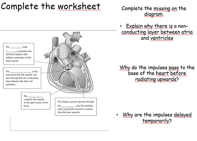 A2 Biology: The Heart and Electrical Activity   Biology, A ...