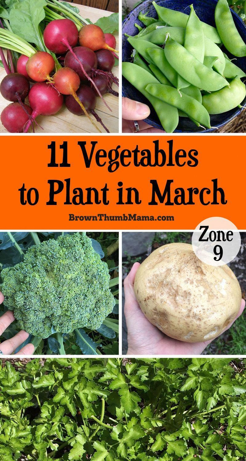 It S Not Too Cold To Garden This Planting Guide For Zone 400 x 300