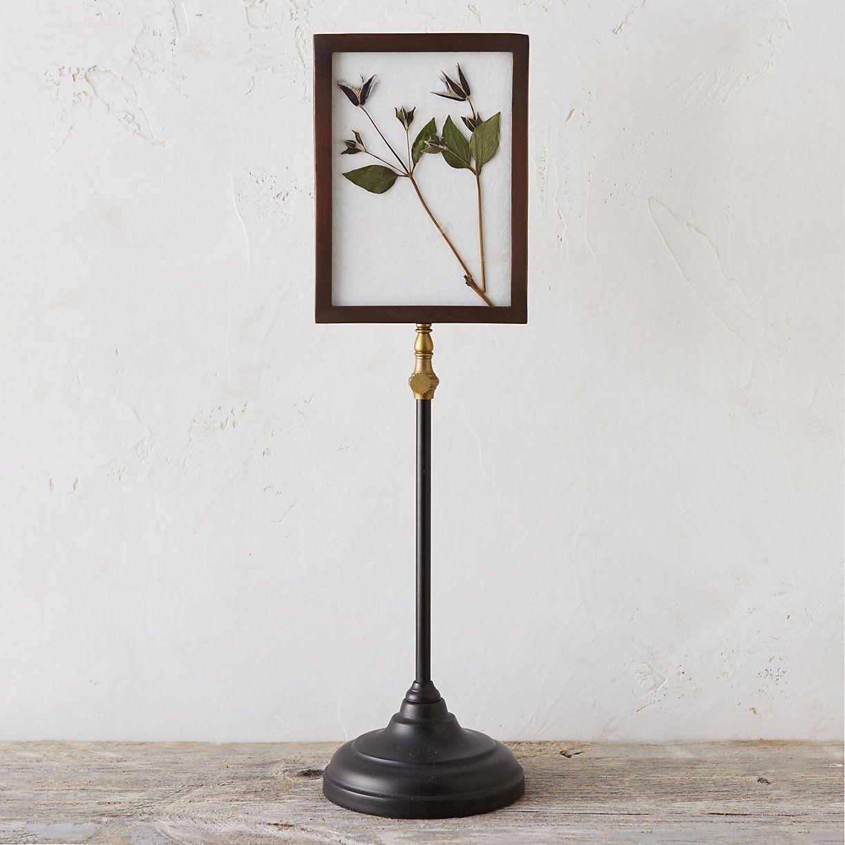 Standing Specimen Frame, Large | Pinterest | 5x7 frames, Metals and ...