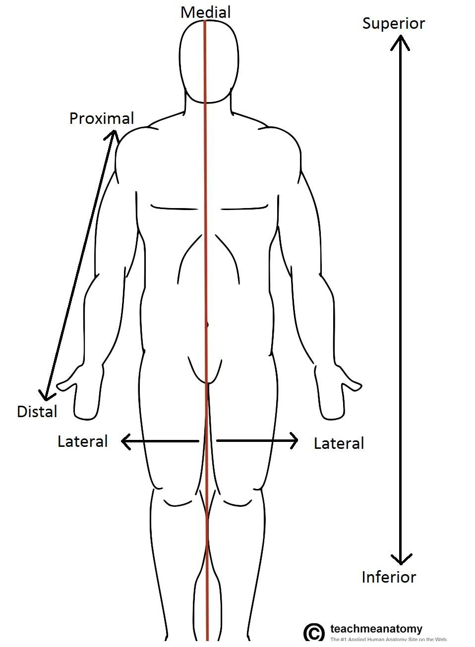 Fig 10 Anatomical Terms Of Location Labelled On The Anatomical