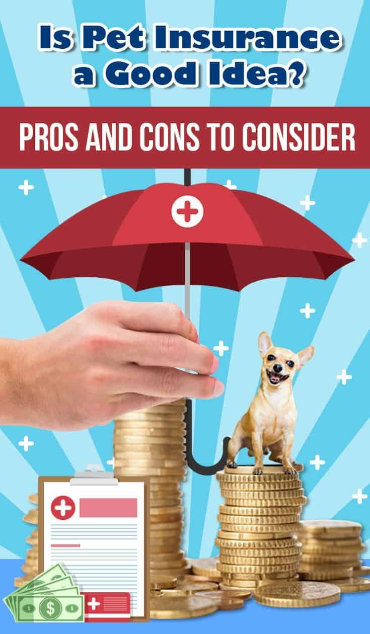 Discover the pros and cons with pet insurance with these