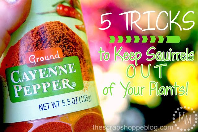 The Scrap Shoppe 5 Tricks To Keep Squirrels Out Of Your Plants Organic Gardening Tips Plants Organic Gardening