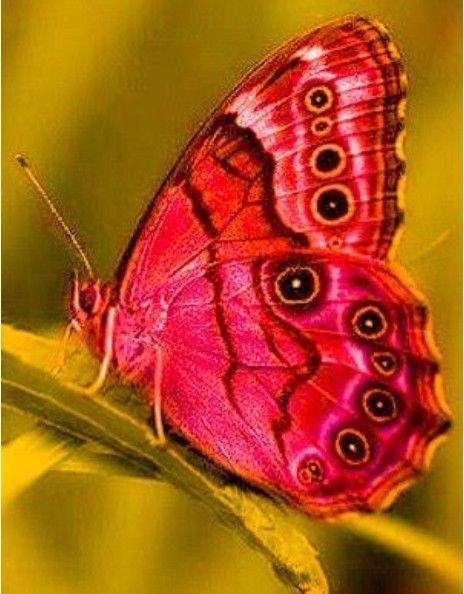 Pin Von Monika Bastelfreundin Auf Schmetterlinge Motten Insekten Schmetterling Tiere