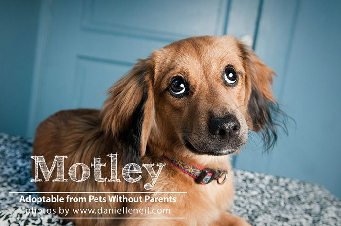 Oh those puppy dog eyes! Motley is looking for her furever