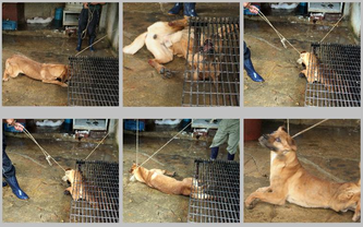 dog meat trade in South Korea - Occupy for Animals! Aa.l I can say is that this country is damned for what they do to animals. We need to boycott this fur.. Awful, disgusting, terrible  People