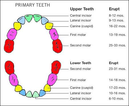 Baby Teething Chart | Baby girl | Pinterest | Teeth, Babies and Charts