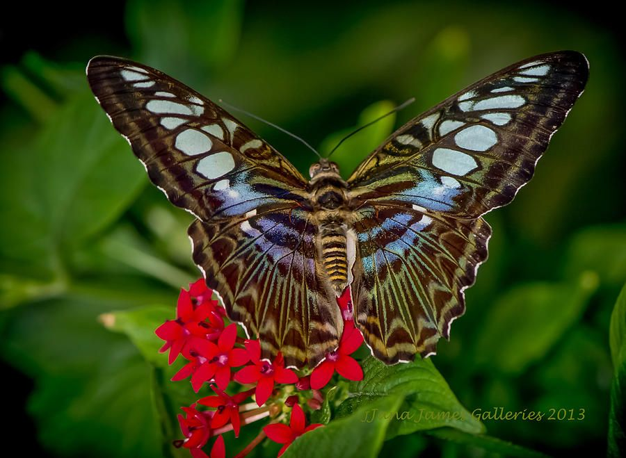 butterfly exotic tropical insect - photo #35