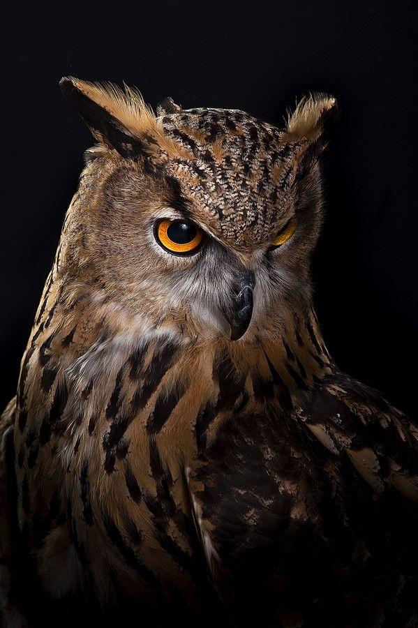 Owl By Javier Senosiain Jimeno On 500px Uhu Eule