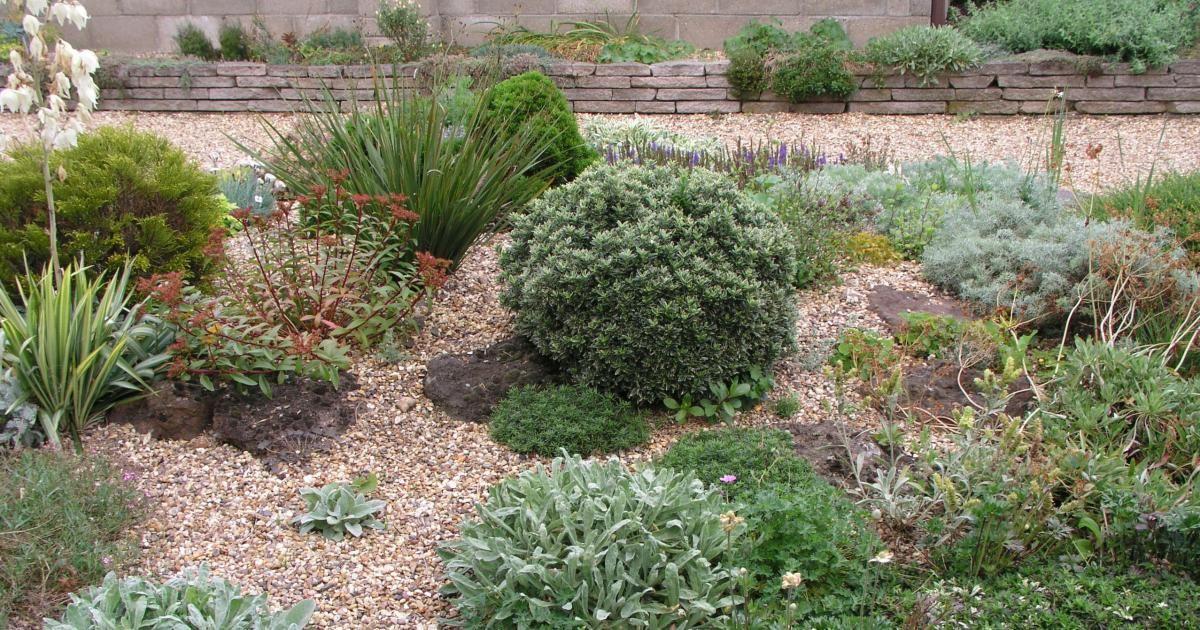 Kiesgarten Steine, Gräser und bunte Blumen - vorgarten gestalten mit kies und grasern