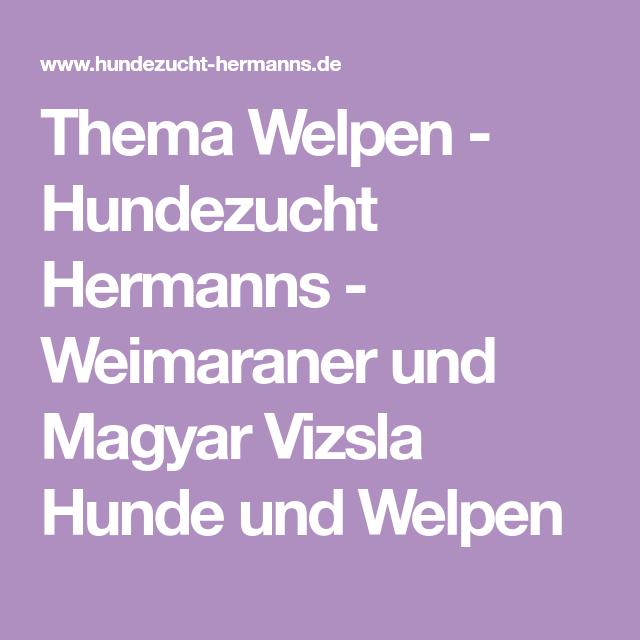 Thema Welpen Hundezucht Hermanns Weimaraner Und Magyar Vizsla Hunde Und Welpen Welpen Vizsla Vizsla Hund