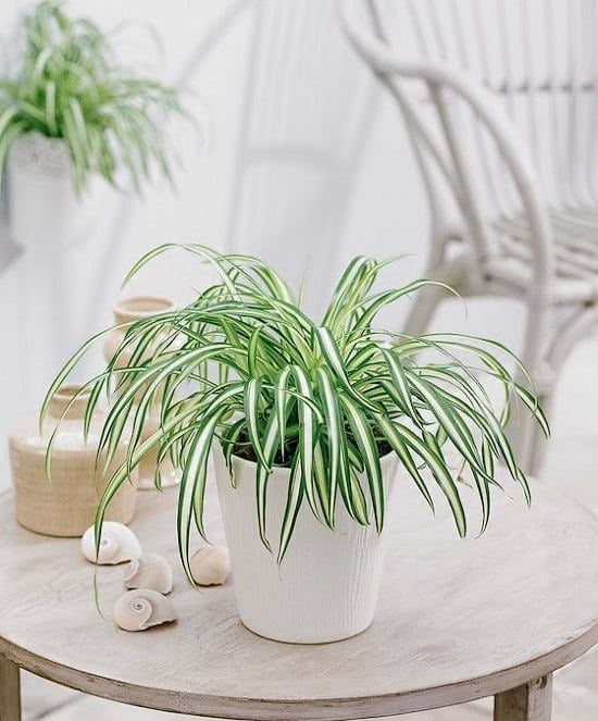 21 Best Coffee Table Plants To Grow Indoors (With images ...