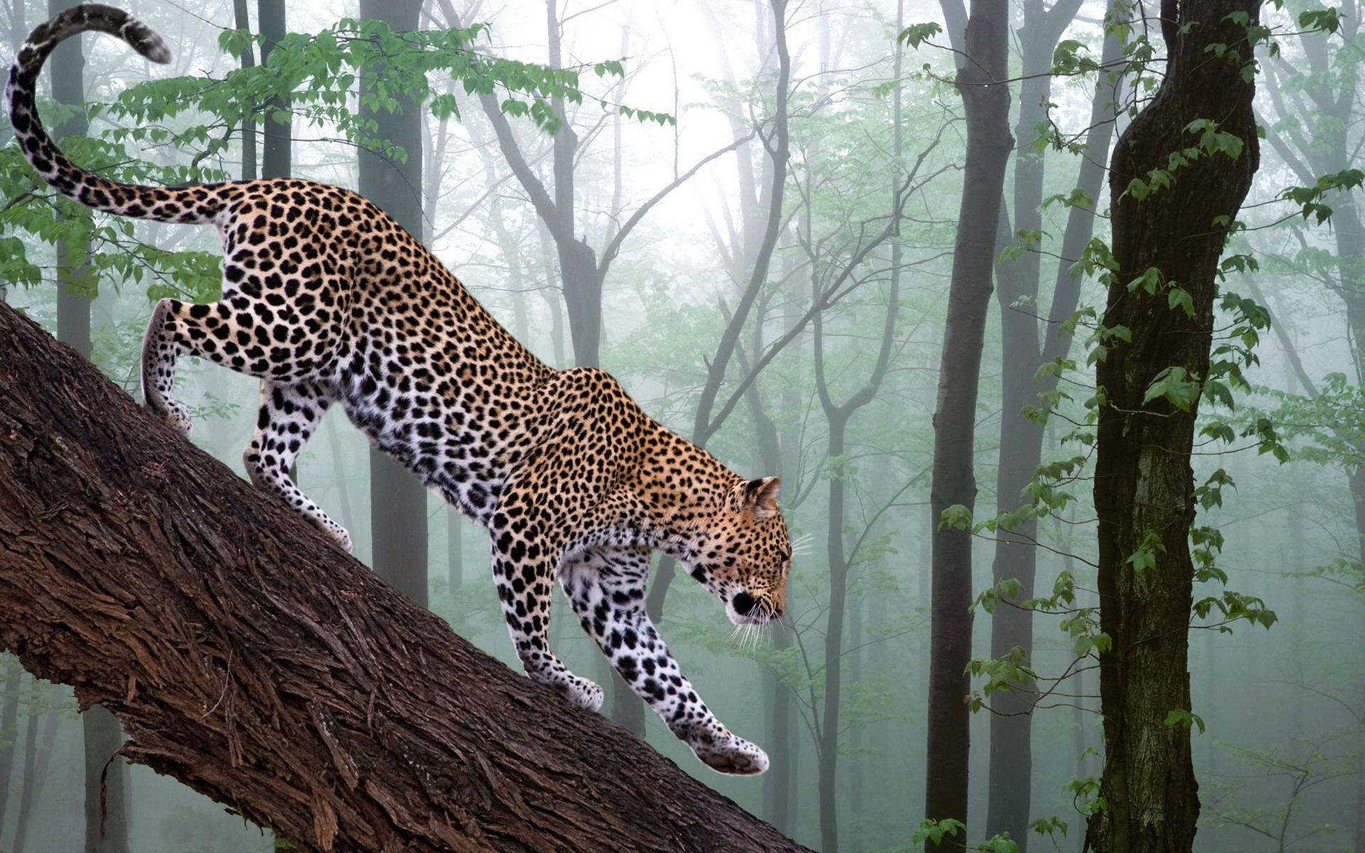 Nice Cat Nature Wallpapers In Hd From Www Hotszots Eu Jungle