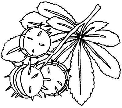 110-Malvorlagen-Ausmalbilder-Baum-Bäume-Blätter-Früchte-Herbst.jpg ...
