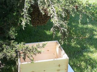 Charmant Free Online Beekeeping Lessons About Beekeeping, Beekeeping Supplies,  Beekeeping Classes, Beekeeping Equipment,
