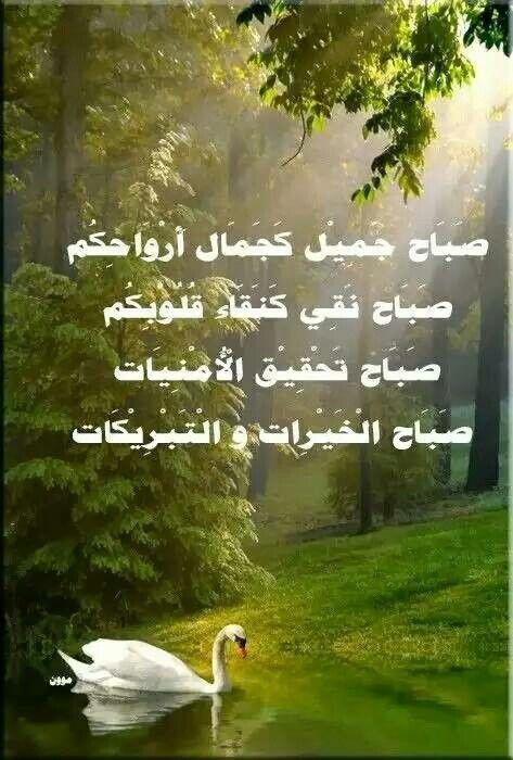 صباح جميل كجمال ارواحكم صباح نقي Morning Pictures Good Morning Picture Good Morning Arabic
