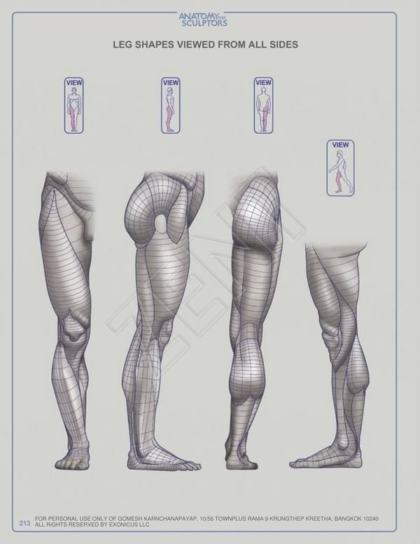 Pin By Diegogv On Legs Pinterest Anatomy Anatomy Reference And