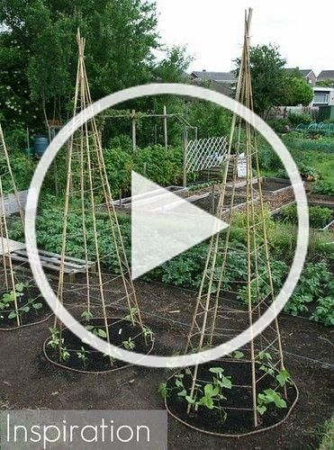 Photo of Flowers And Garden Ideas : DIY Bean Teepee Garden supports
