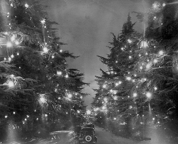 Come One Come All To Christmas Tree Lane Vintage Christmas Tree Christmas Tree Christmas Lights