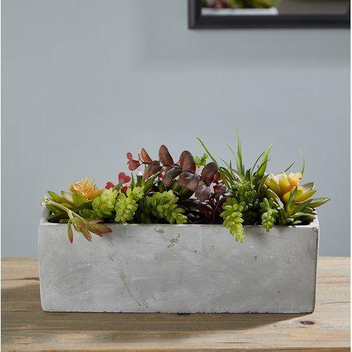 Zipcode Design Mixed Desktop Succulent Plant In Planter Succulents Planting Succulents Fake Succulent Plants