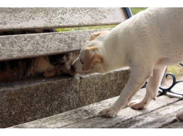 Superbe Chiot Jack Russell Terrier De 07 Adoption Don Animaux Bordeaux 33100 Avec Vivastreet Chiot Donne Chien Jack Russell Terrier