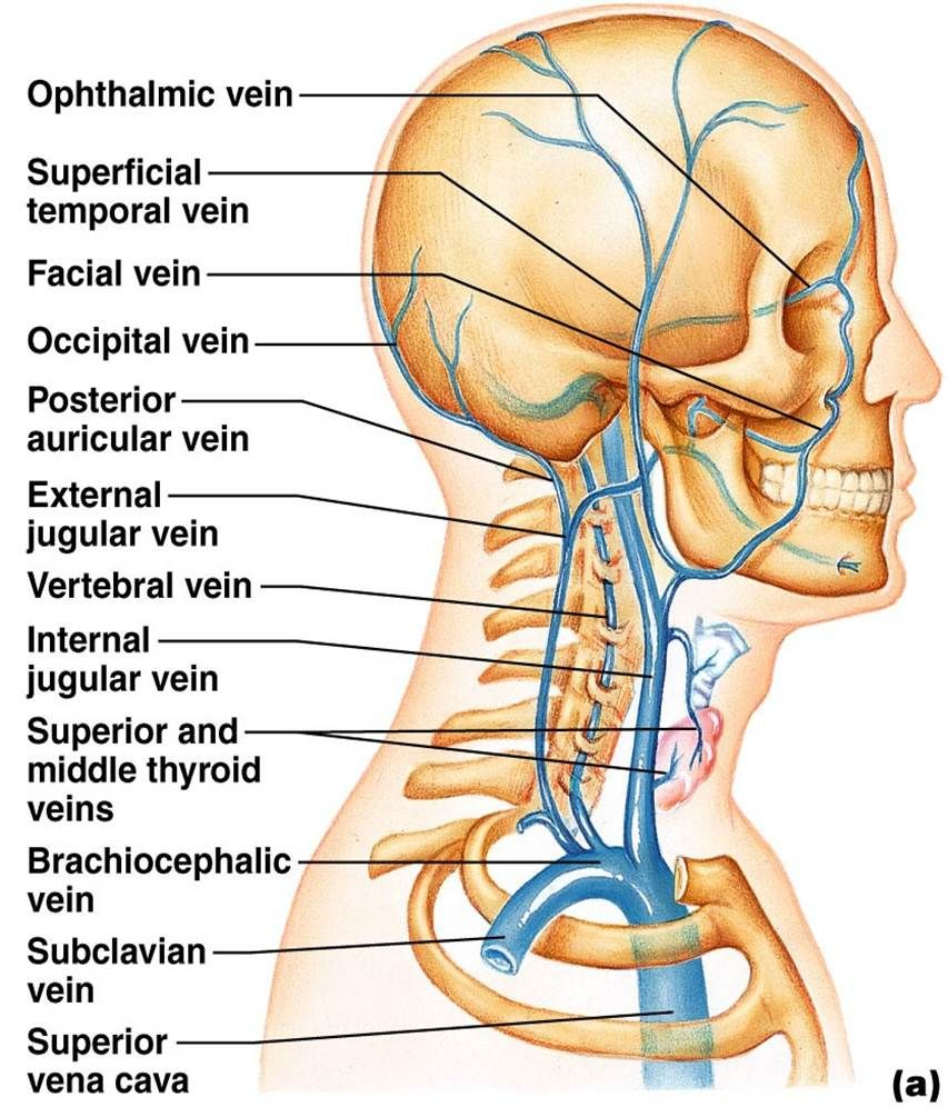 bio 202 arteries and veins key arteries anatomy vascular ultrasound interventional radiology arteries [ 853 x 1005 Pixel ]