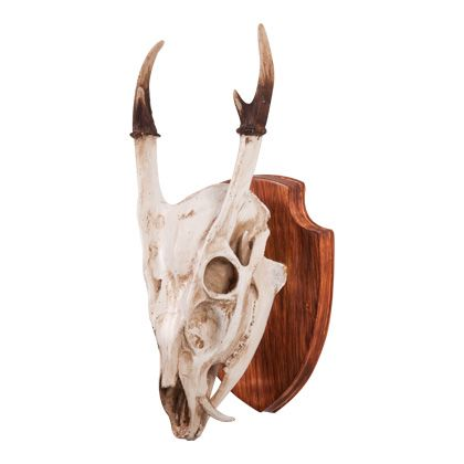 Antelope skull wall decor small deer on plaque also horns tribal pinterest rh