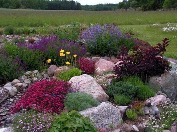 steingarten polsterstauden bodendecker farbtupfer lila fuchsie ...