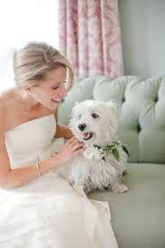 dog in wedding