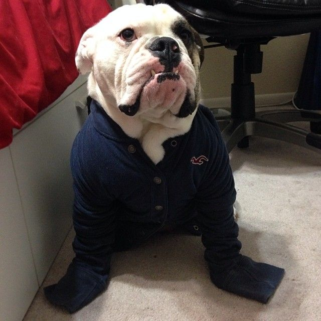 After hearing about the winter storm that's headed our way, Copernicus decided it was time to try on some jackets. #Padgram