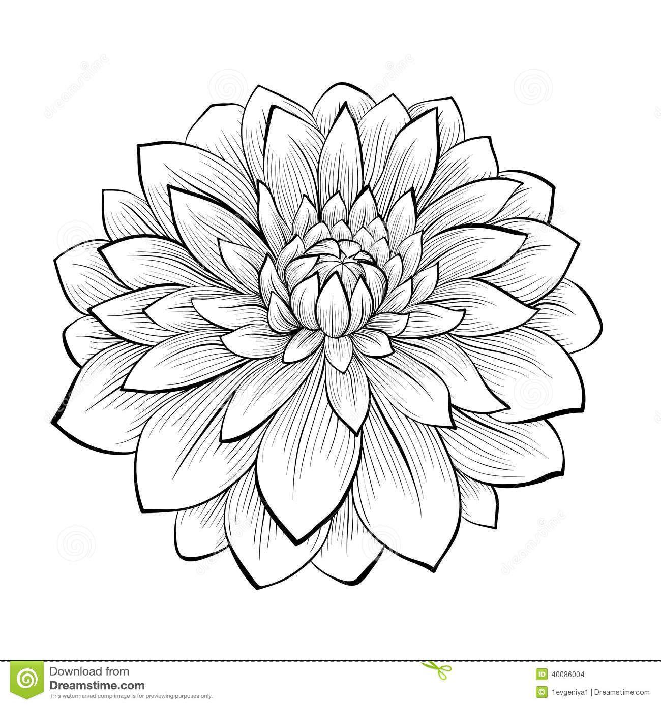 Beautiful Monochrome Black And White Dahlia Flower Isolated On Dahlia Flower Tattoos Flower Drawing Flower Tattoo
