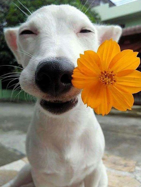 Flowers & Animals - Floranext - Florist Websites, Floral POS, Floral Software