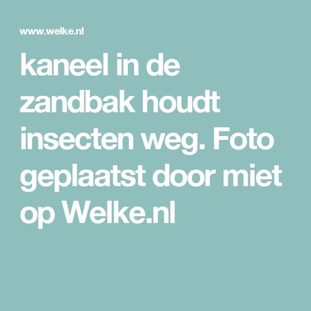kaneel in de zandbak houdt insecten weg. Foto geplaatst door miet op Welke.nl