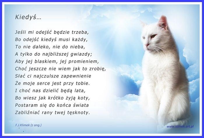 Tęczowy Most Elmowo Wiersze Koty I Kotki