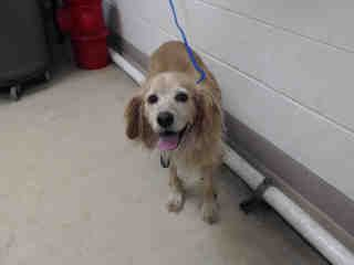 Pin By Dj Vieira On Adopt And Love Forever Find Pets Animal Shelter Harris County
