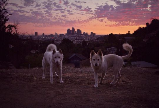 John & Wolf