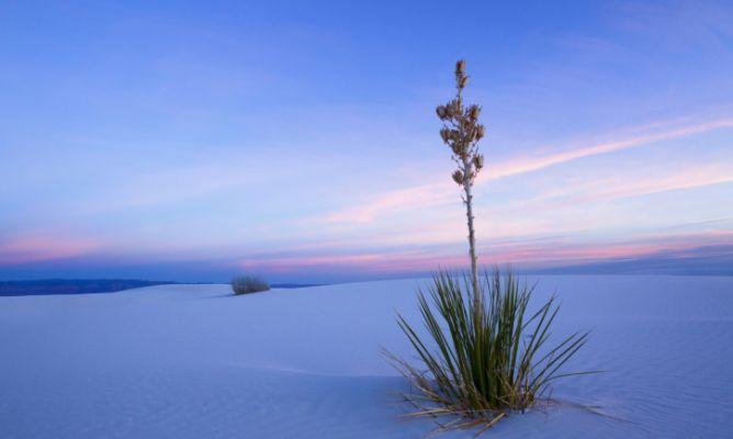 5 plantas que encontrarás en el Desierto de Chihuahua