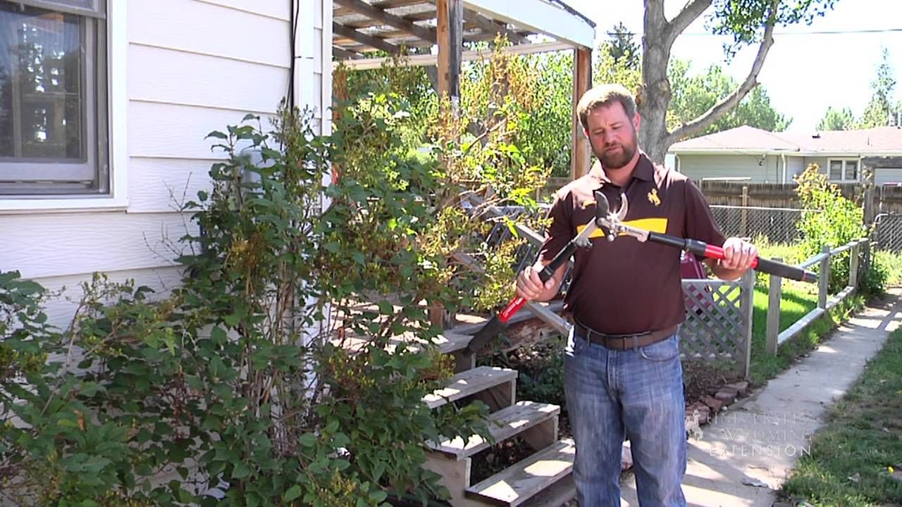 Pruning Tools From the Ground Up Pruning tools, From