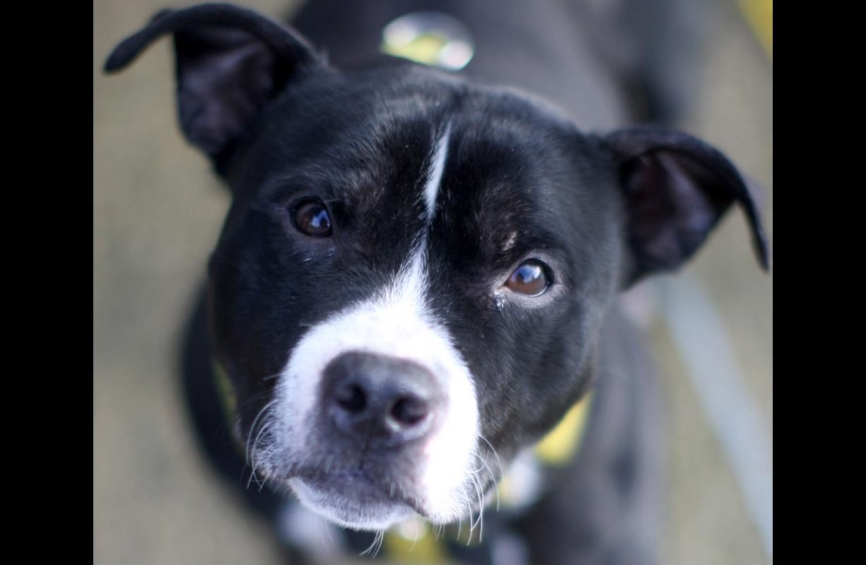 Dexter dog adoption dogs rehoming