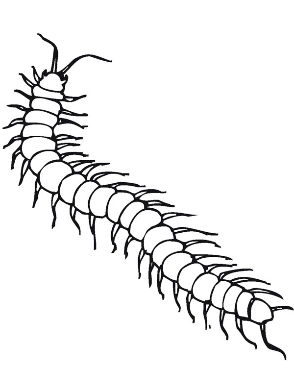 Poisonous Centipede Insect Coloring Page Coloring Sky Insect Coloring Pages Coloring Pages Insects